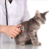 Ветеринарные клиники в Заводоуковске